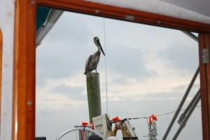 Pelican Statuette by Wes Clow